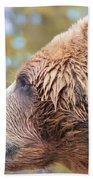 Brown Bear Portrait In Autumn Beach Towel