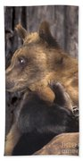 Brown Bear Tackles An Itchy Foot Endangered Species Wildlife Rescue Beach Towel