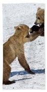 Brown Bear Ursus Arctos Cubs Play Beach Towel