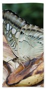 Brown Clipper Butterfly #3 Beach Towel