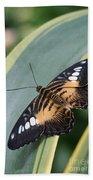 Brown Clipper Butterfly #4 Beach Towel