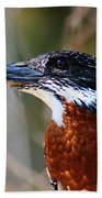 Brown Crested Kingfisher Beach Towel