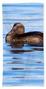 Brown Duck Beach Sheet