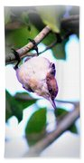 Brown-headed Nuthatch 9173-006 Beach Towel