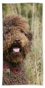 Brown Labradoodle In Field Beach Towel