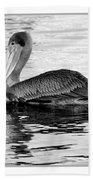 Brown Pelican - Black And White Beach Towel