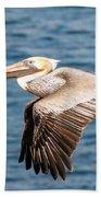Brown Pelican Flying Beach Towel