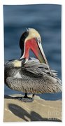 Brown Pelican Preening Beach Towel