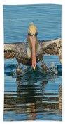 Brown Pelican Taking Off Beach Towel
