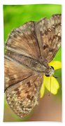 Brown Skipper Butterfly Square Beach Towel