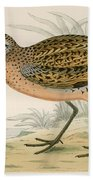 Brown Snipe Beach Towel