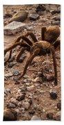 Brown Tarantula Beach Towel