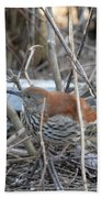 Brown Thrasher Beach Towel