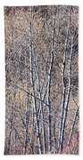 Brown Winter Forest With Bare Trees Beach Towel