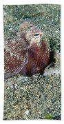 Brownstripe Octopus Burying Itself Beach Towel
