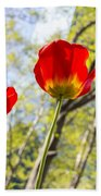 Bryant Park Tulips New York  Beach Towel
