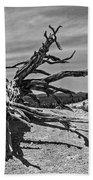 Bryce Canyon Tree Art Beach Towel