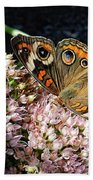 Buckeye Butterfly On Sedum Beach Towel