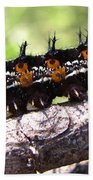 Buckeye Caterpillar 2 Beach Sheet