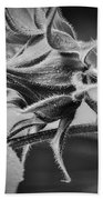 Budding Sunflower In Black And White Beach Towel