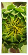 Budding Sunflower Beach Towel