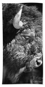 Buffalo Portrait Beach Towel
