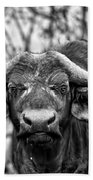 Buffalo Stare In Black And White Beach Towel