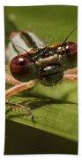 Bug Eyes Beach Sheet