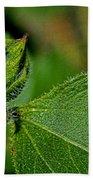 Bug On Leaf Beach Towel