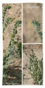 Bugloss Fiddleneck Collage Beach Towel