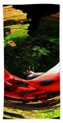 Bugs At The Zoo Lady Bug Beach Towel