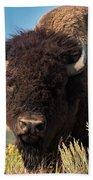 Bull Bison Beach Towel