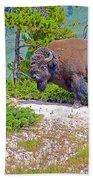 Bull Bison Near Mud Volcanoes In Yellowstone National Park-wyoming Beach Towel