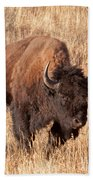 Bull Bison Running In Yellowstone National Park Beach Towel