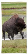 Bull Bison Shaking In Yellowstone National Park Beach Towel