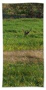Bull Elk At Dean Creek Beach Towel