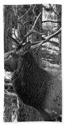 Bull Elk Bw Beach Towel