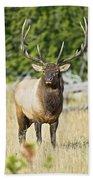 Bull Elk IIII Beach Towel