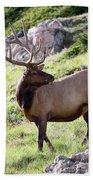 Bull Elk In Velvet Beach Towel