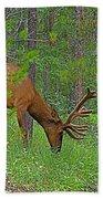 Bull Elk Near Maligne Canyon In Jasper Np-alberta Beach Towel