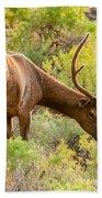 Bull Elk Profile Beach Towel