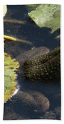 Bull Frog Beach Towel