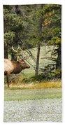 Bull In Waiting Beach Towel
