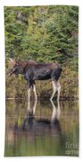 Bull Moose 3 Beach Towel