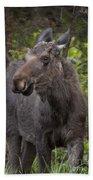 Bull Moose   #5654 Beach Towel