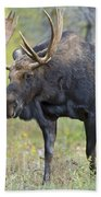 Bull Moose IIIIi Beach Towel