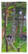 Bull Moose In Cape Breton Highlands Np-ns Beach Towel