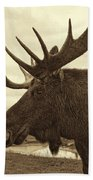 Bull Moose In Sepia Beach Towel