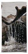 Bull Moose Beach Towel