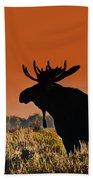 Bull Moose Sunset Beach Towel